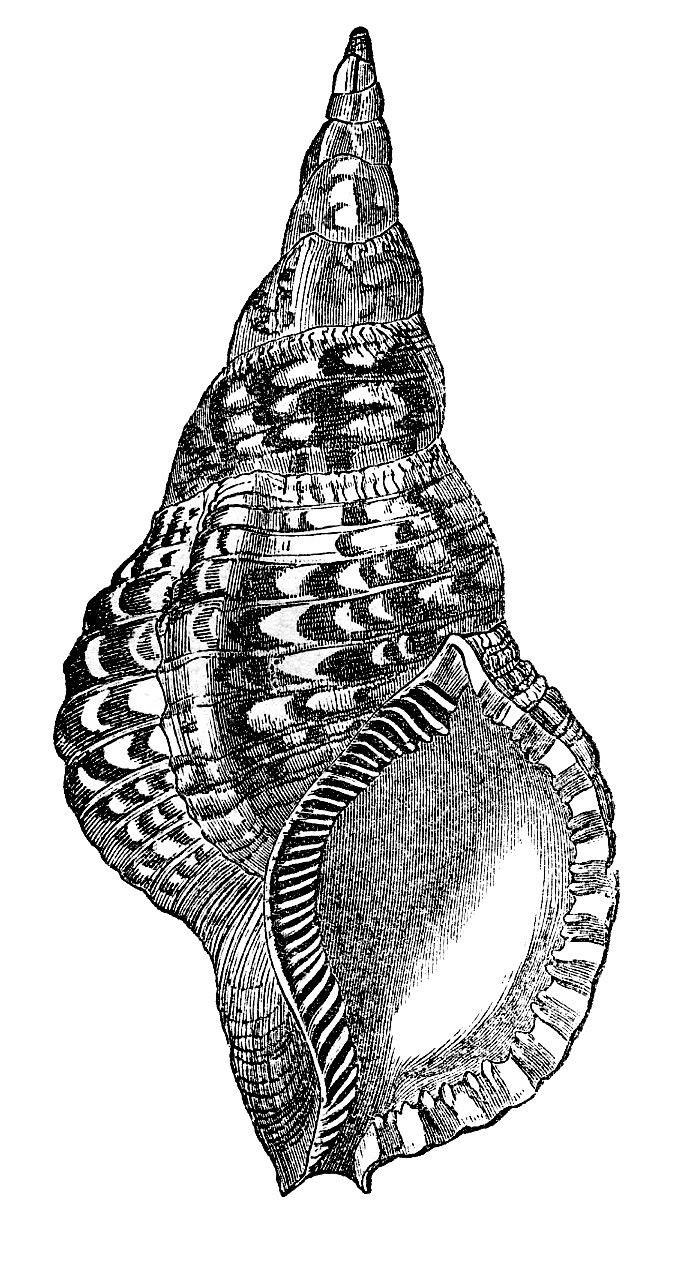 Natural History Clip Art.