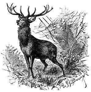 Deer ~ Free Vintage Clip Art (Old Design Shop Blog).