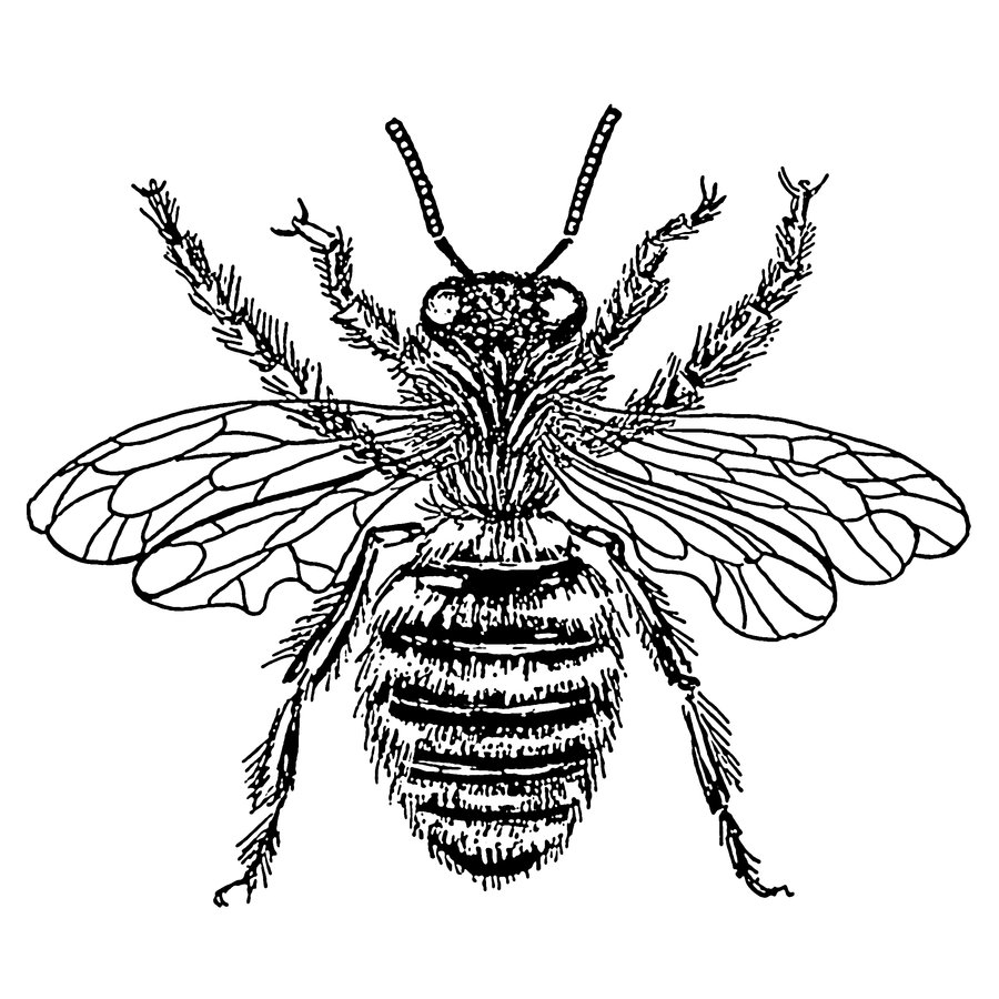 Free Honey Bee Illustrations, Download Free Clip Art, Free.