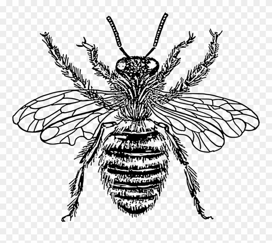 Bee Queen Svg Vector File, Vector Clip Art Svg File.