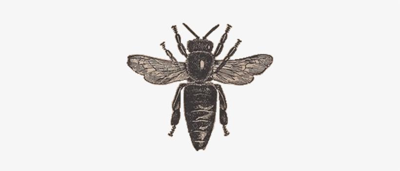 Vintage Honey Bee Clipart.