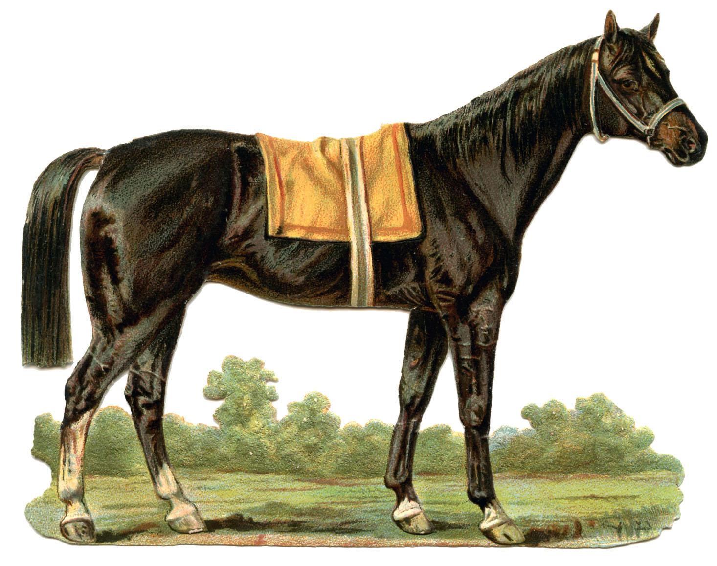 16 Horse Clip Art Images!.