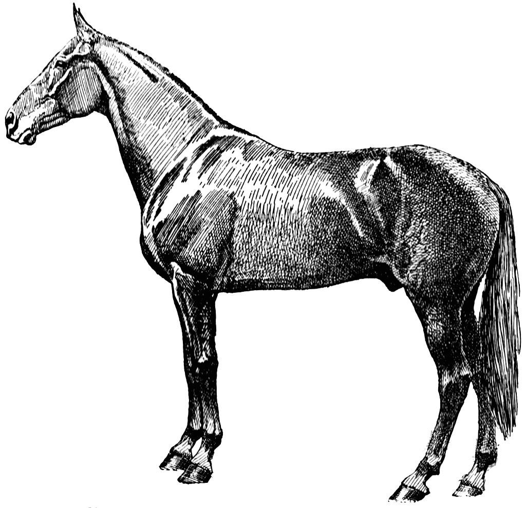 Free Victorian Horse Cliparts, Download Free Clip Art, Free.