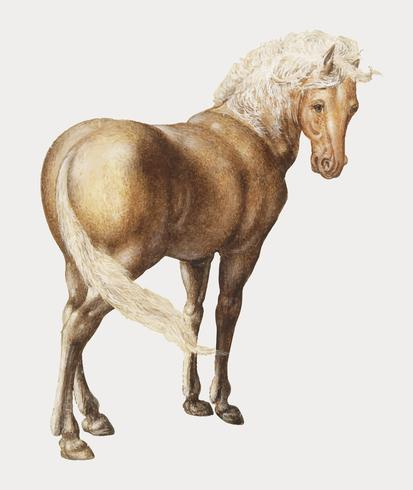 Horse in vintage style.