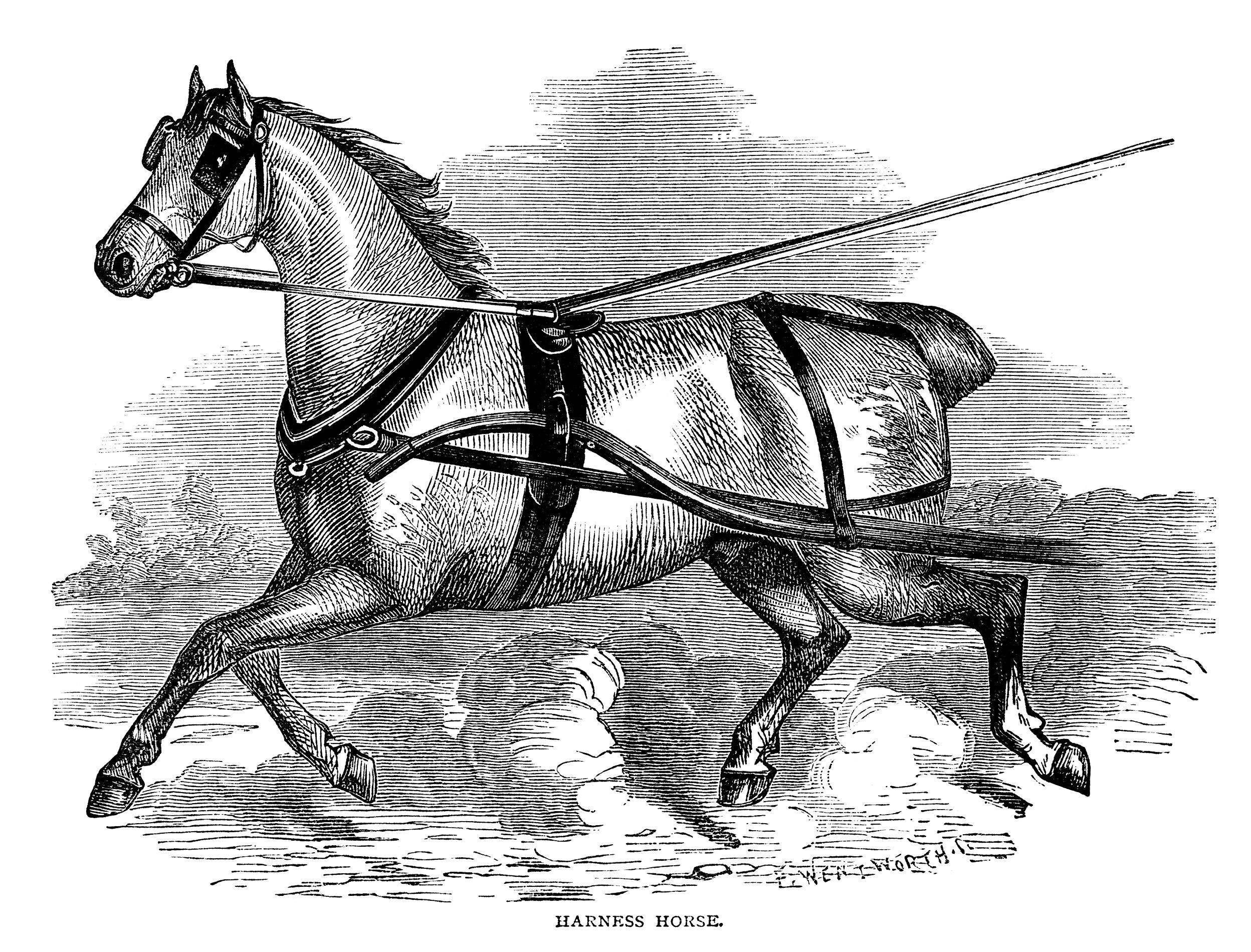 Harness Horse ~ Free Vintage Clip Art.