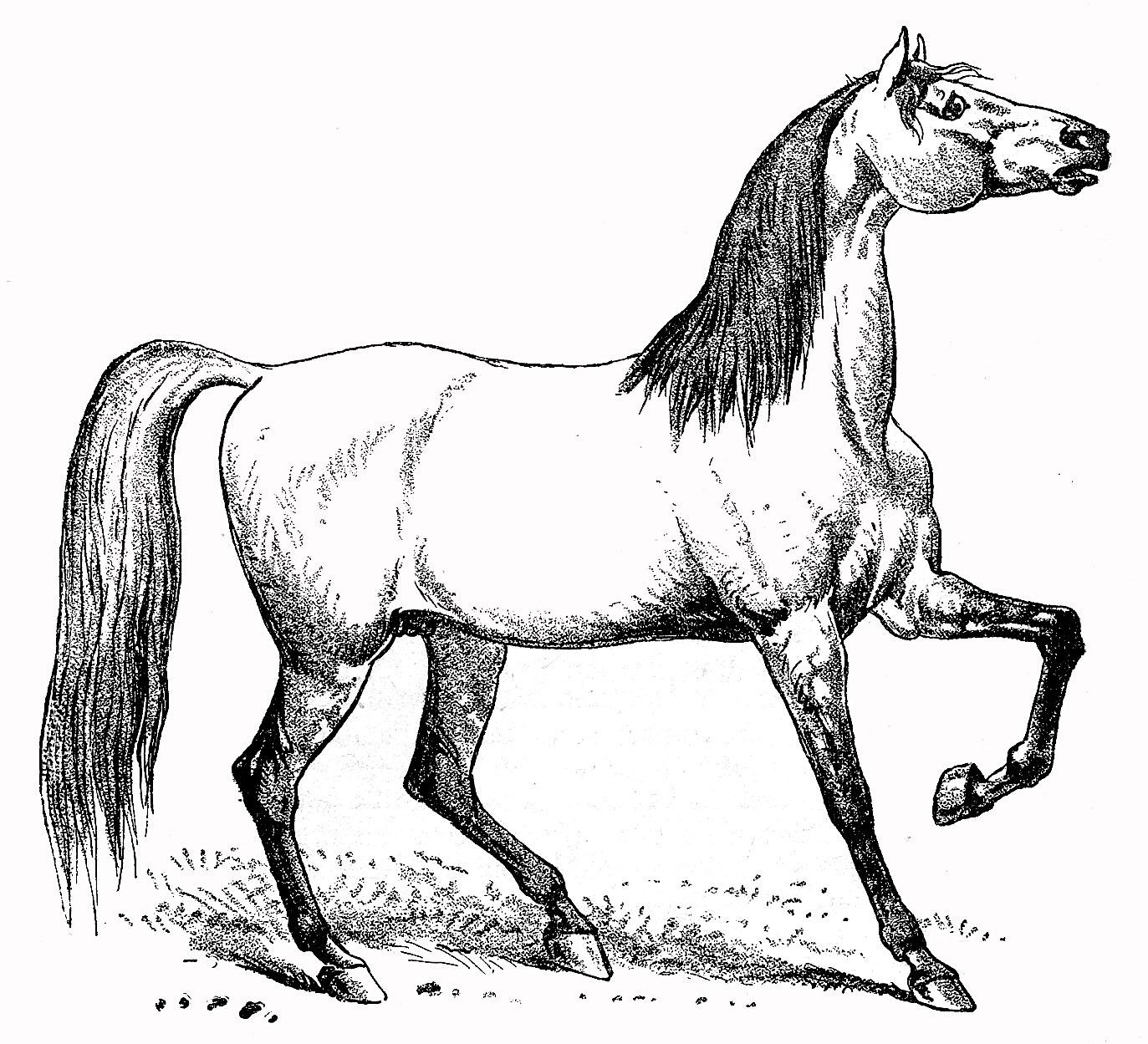 Vintage Horse Clipart.