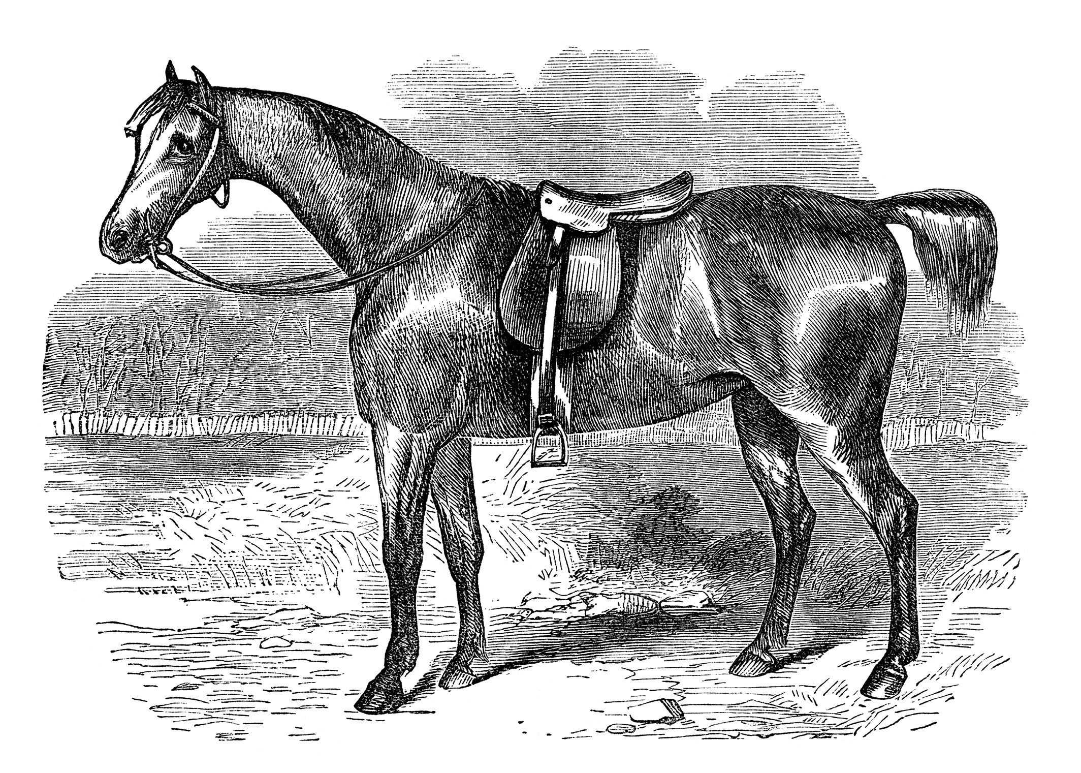 vintage horse clipart, black and white clip art, covert hack.