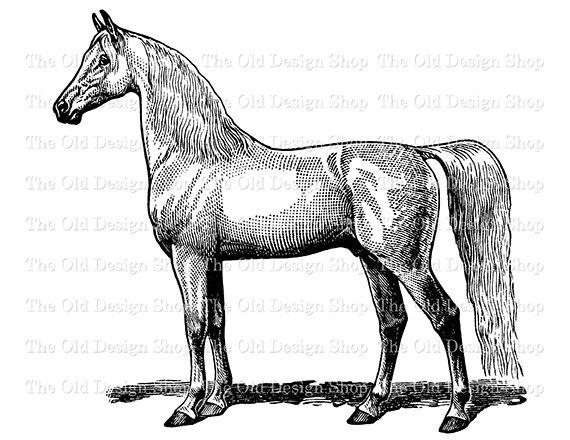 Vintage Horse Clip Art Printable Farm Animal Digital Stamp.