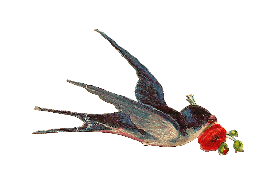 Vintage Bird transparent PNG.