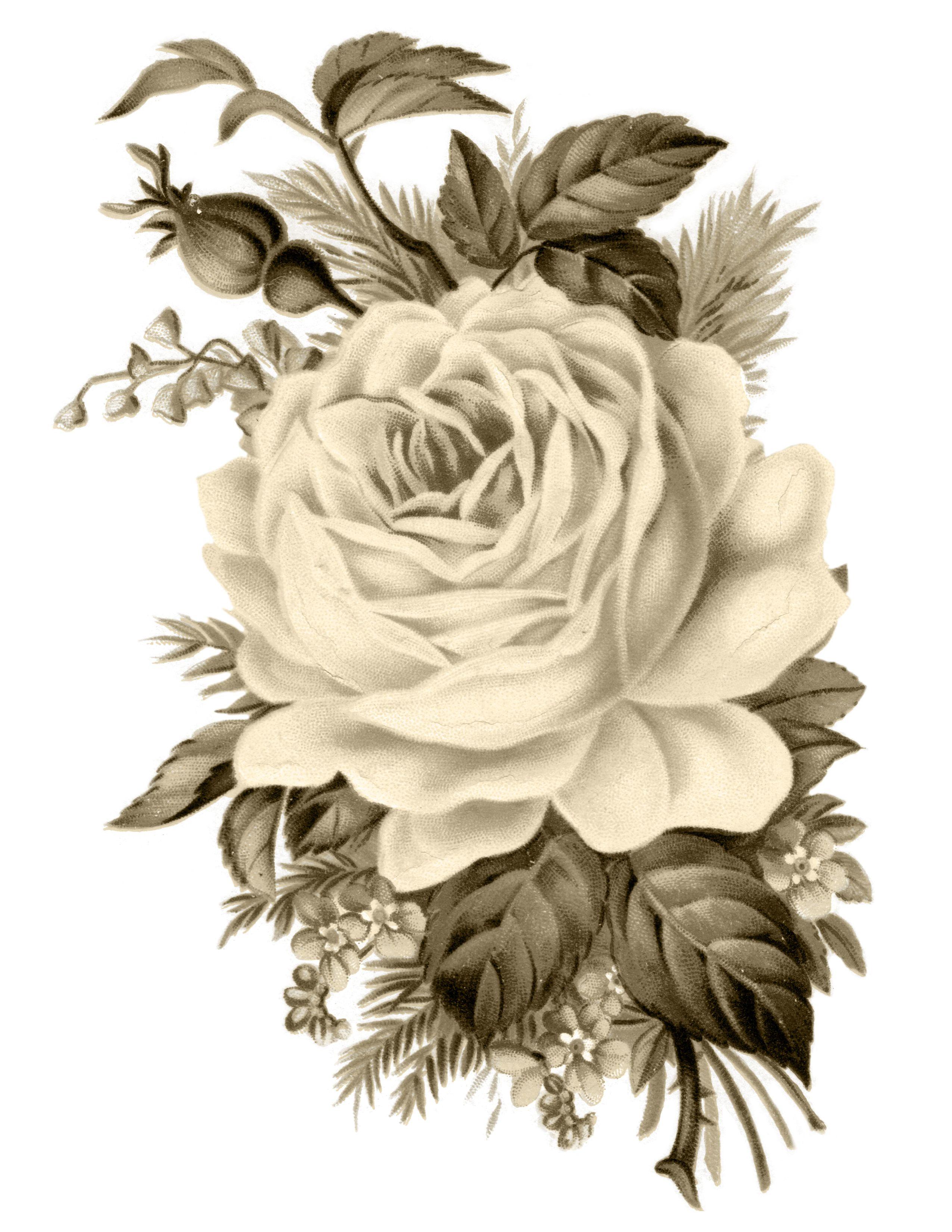 Clip Art: Royalty Free Gorgeous Vintage Rose Image.