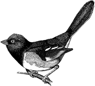 24 Free B&W Vintage Bird Clip Art.