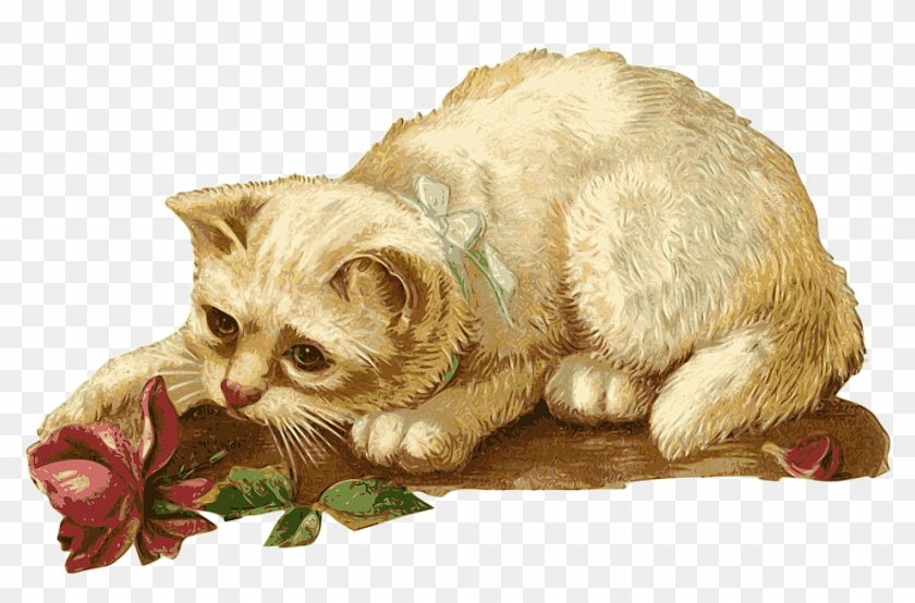 Cat, Kitten, Rosa, Flower, Animal, Pet, Vintage.