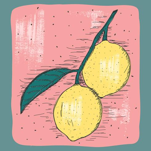 Vintage Lemon Illustration.