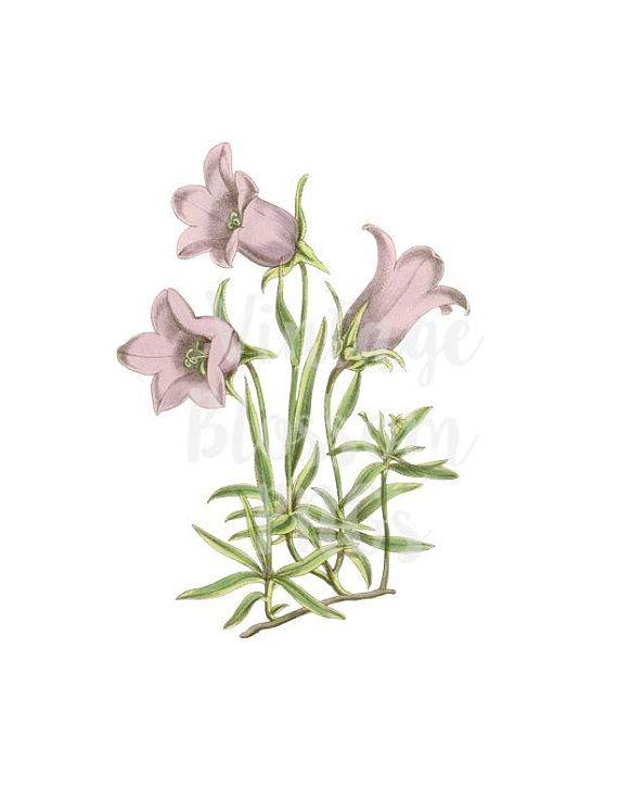 Lilac Flower Clipart Vintage Illustration Digital Download.