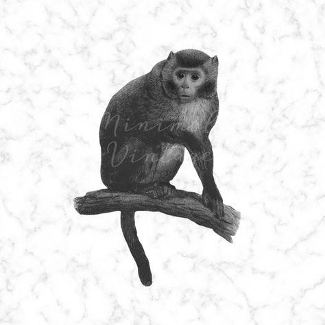 Vintage Monkey Clipart Jungle Digital Image Printable Art.