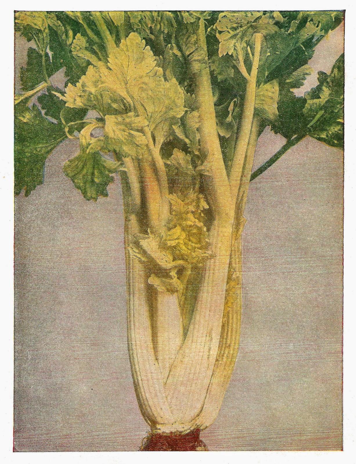 Antique Images: Free Digital Food Clip Art: Digital Food.