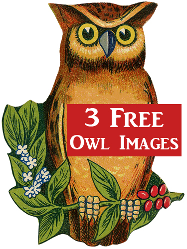 3 Cutest Vintage Owl Images!.