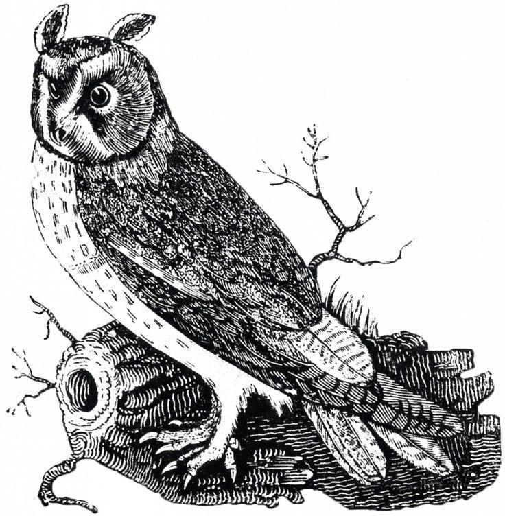 Free Vintage Owl Image.