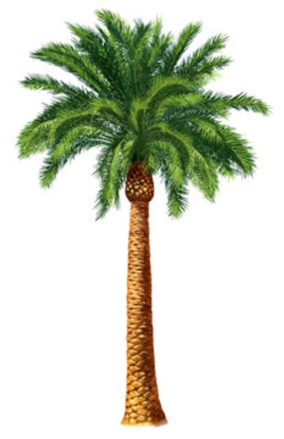 Desert Palm Tree Botanical Island Tropical Tommy Bahama.
