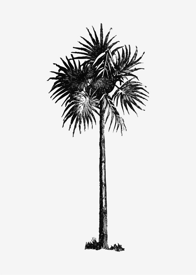 Vintage palm tree illustration Free Vector.