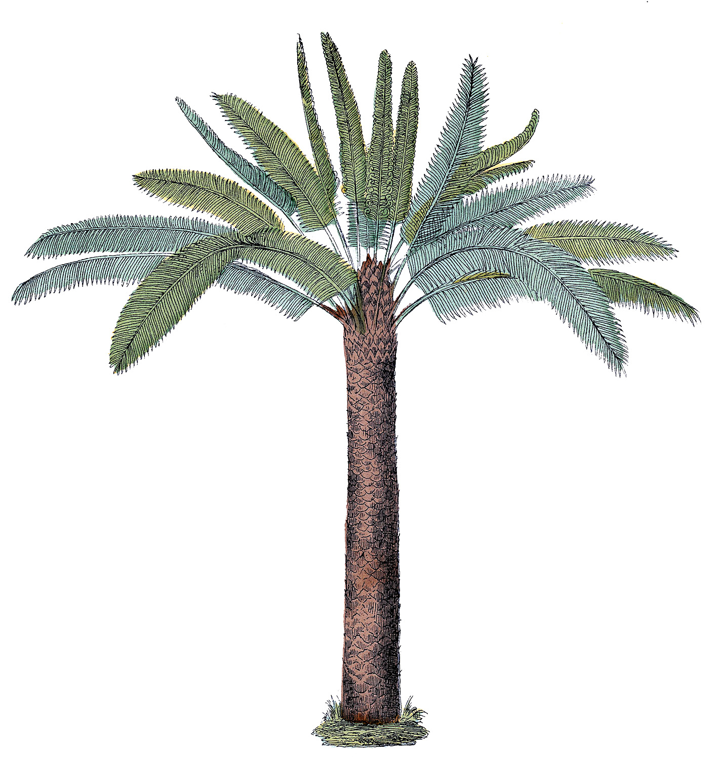 Vintage Palm Tree Graphic.