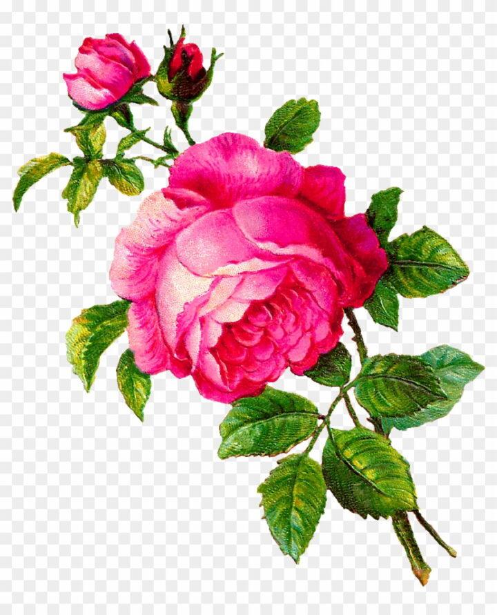 Pink Rose Clip Art Vintage Pink Flower Clipart Image.