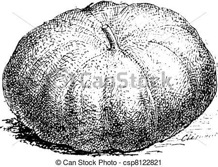 Vector Clip Art of Pumpkin, vintage engraving..