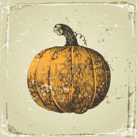 vintage pumpkin drawing clipart - Clipground