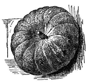 vintage pumpkin clip art, Halloween clipart, black and white.