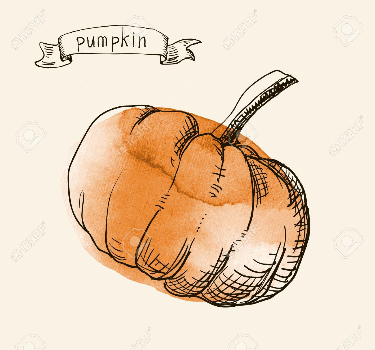 Vector Watercolor Hand Drawn Vintage Illustration Of Pumpkin.