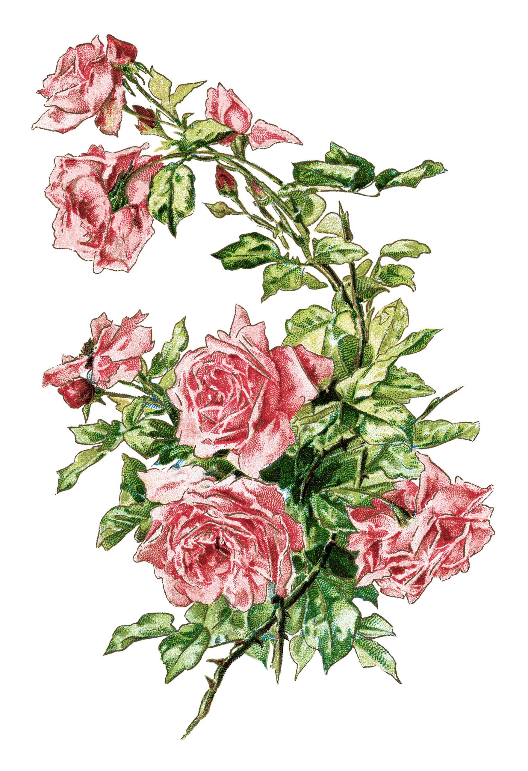 Free Vintage Image ~ Branch of Pink Roses.
