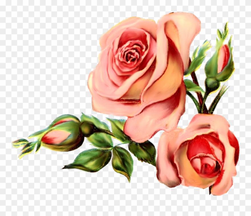 Vintage Rose March.