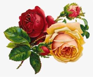 Vintage Rose Png PNG Images.