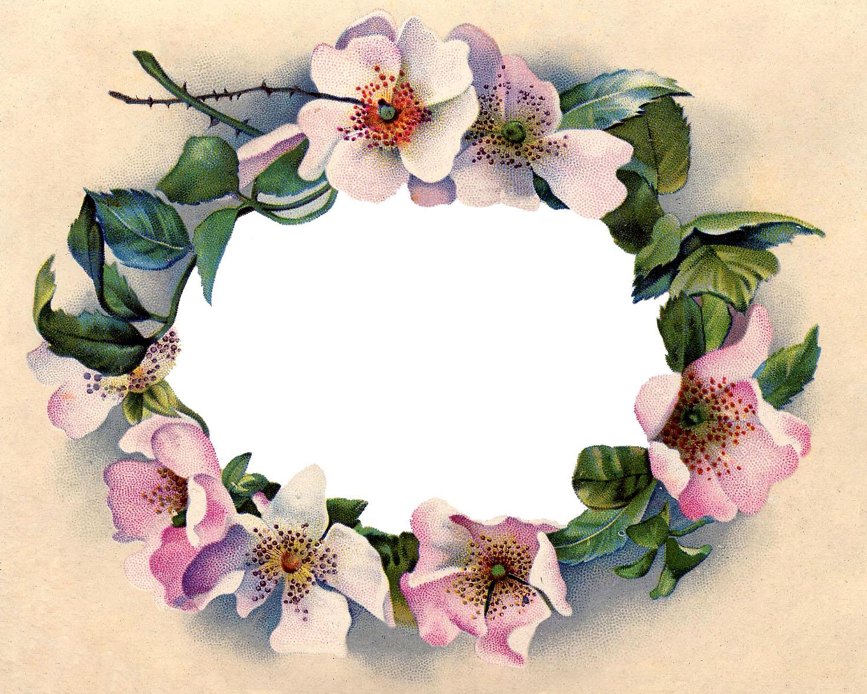 17 Wild Rose Images.