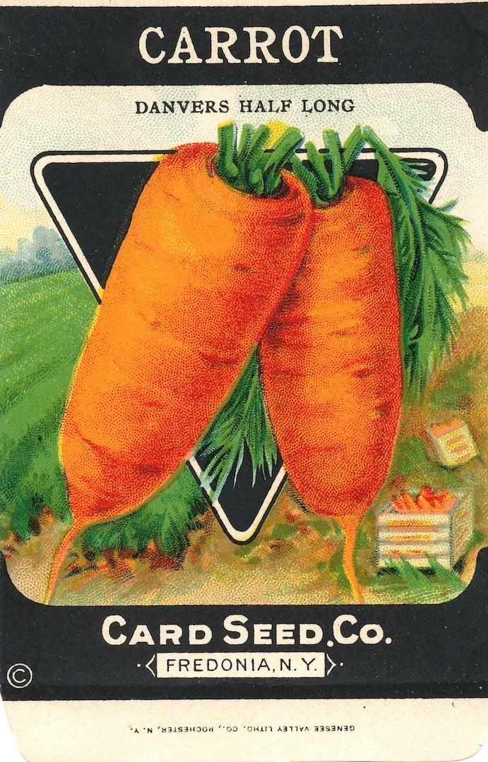 When To Plant Vegetable Garden In Ontario