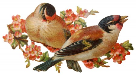 Pretty Victorian Era Vintage Birds on an Apple Tree Blossom.