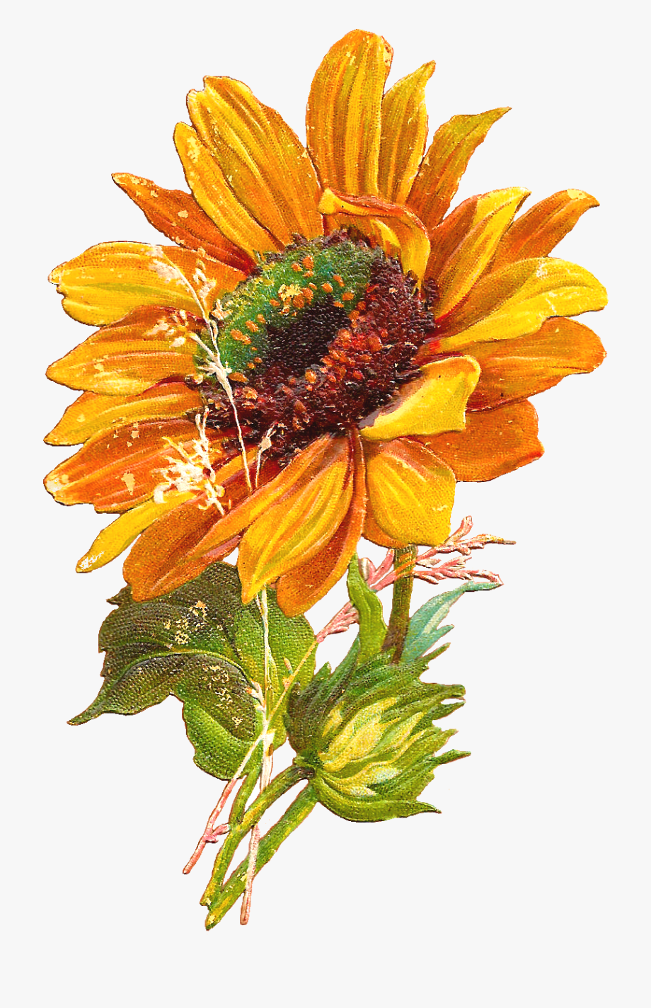Sunflowers Vector Hello.