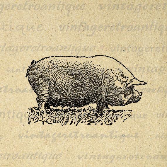 11x14 Antique Pig Digital Image Illustration Download.