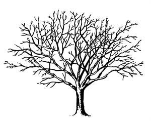 Free Vintage Tree Graphic to Download.