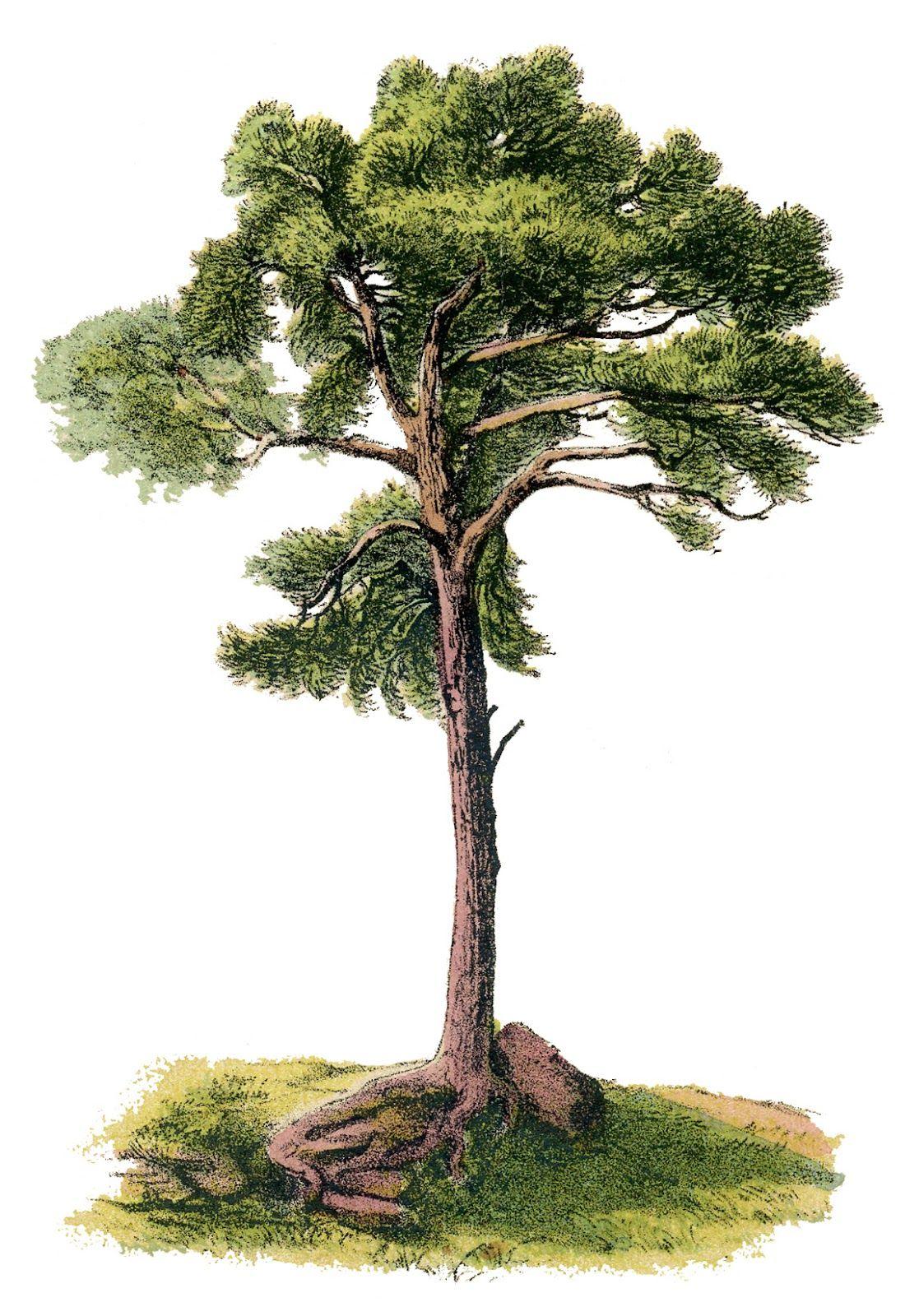 32 Tree Clipart.