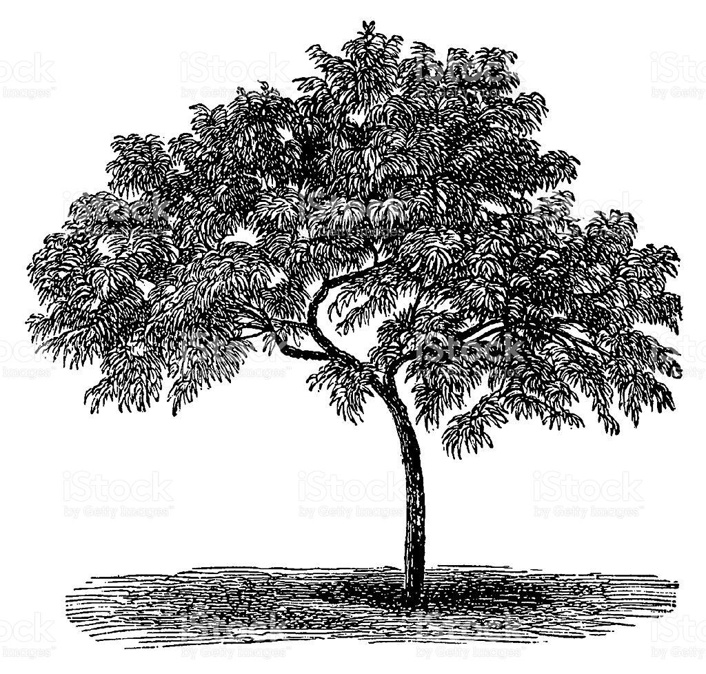 Vintage Tree Clipart.