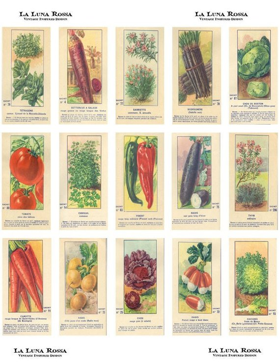 Vintage French Fruit and Vegetable Seed Packets.