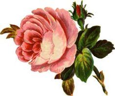 Victorian Flowers Sticker..?.