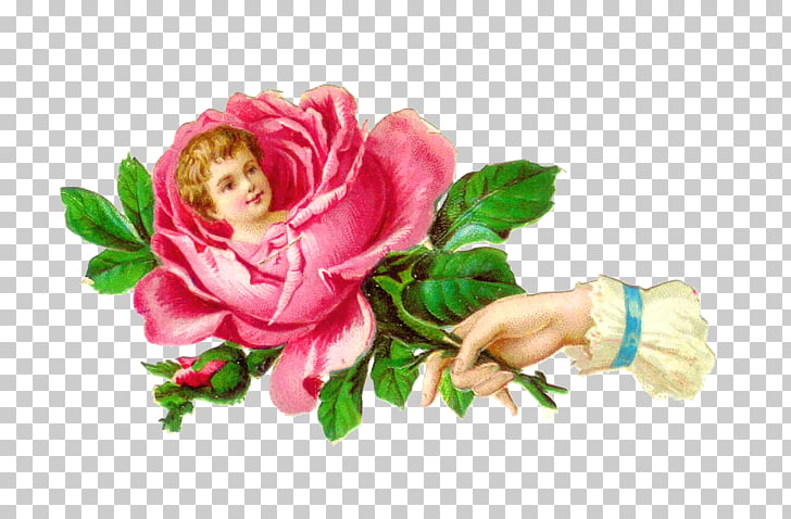 Victorian era Poetry of Flowers Rose , flower vintage PNG.