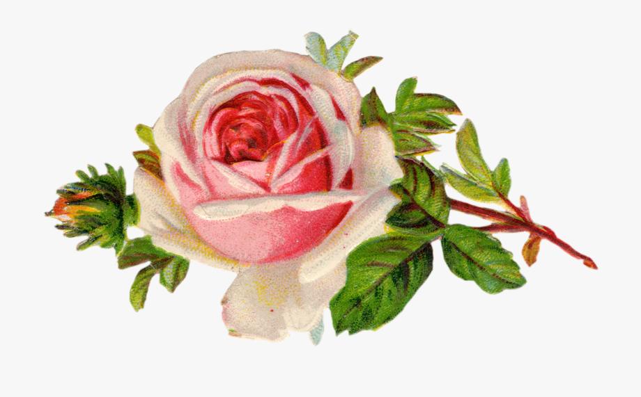Free Vintage Rose Clip Art.