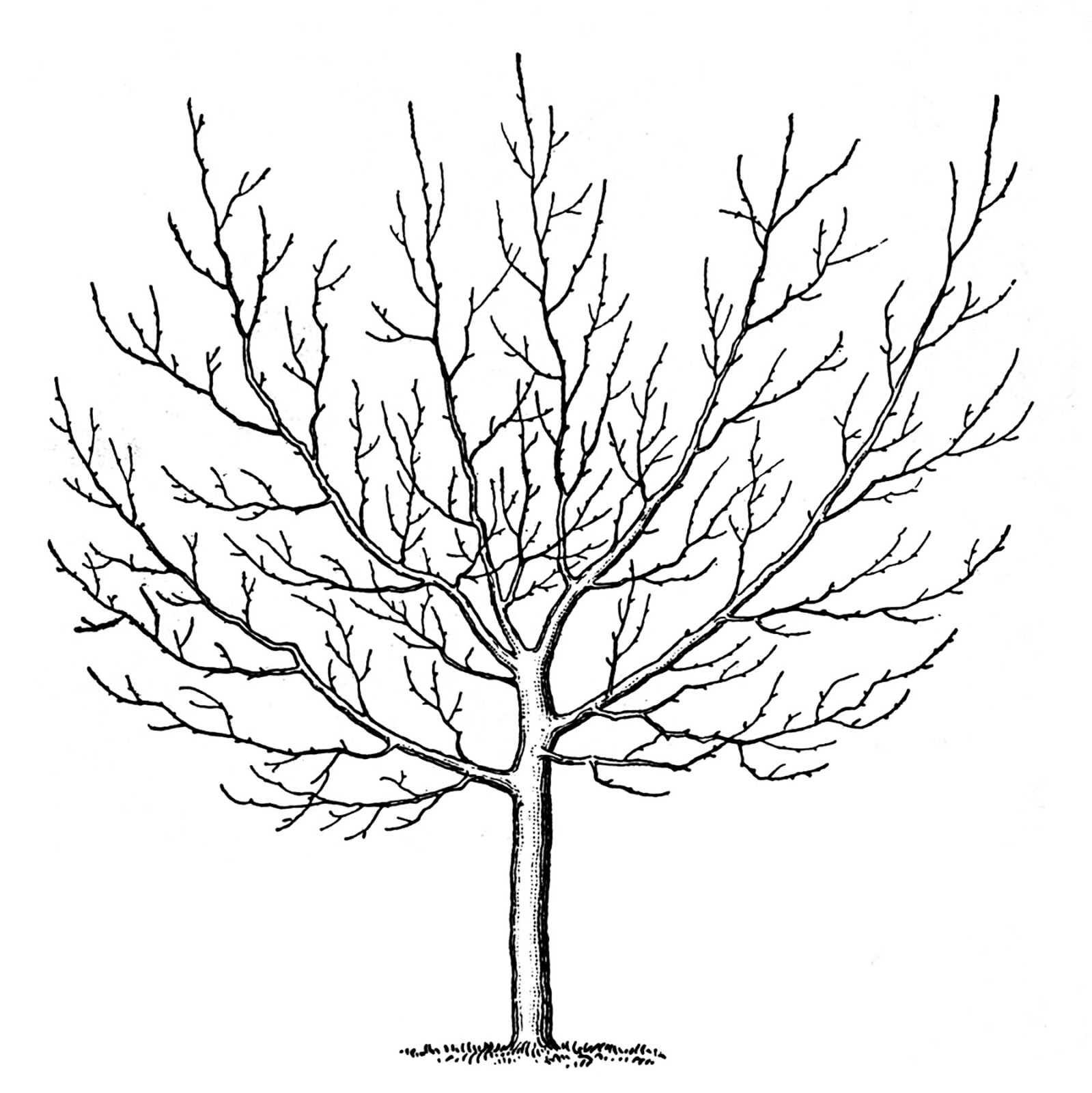 Clipart Vintage Tree Building Black And White.