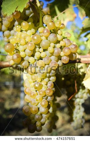 Okanagan Wine Stock Photos, Royalty.