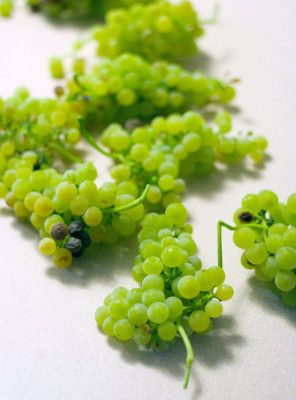 1000+ images about Wine Grapes on Pinterest.