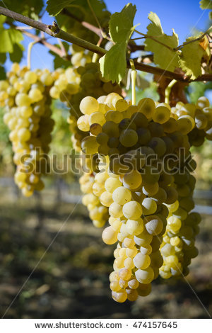 Okanagan Wine Stock Photos, Royalty.