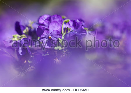 Violets Stock Photos & Violets Stock Images.